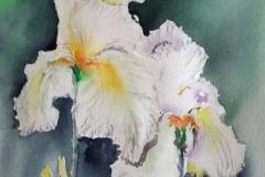 Au jardin des iris à Bubry, couleurs, parfums, amitié, tout y etait